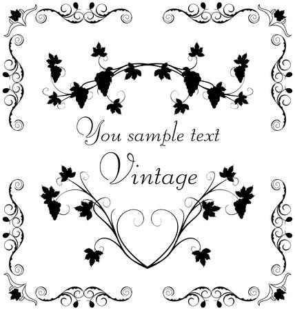 ivy vine: Illustration the grape twig ornate for design labels Illustration