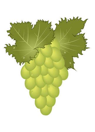 Illustration close-up green grape isolated   illustration
