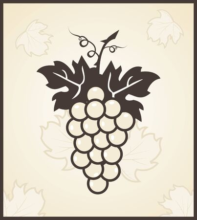 Illustration retro engraving of grapevine - vector Illustration