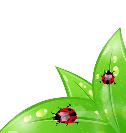 Illustration ecology background with ladybugs on leaves - vector Illustration