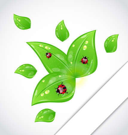 Illustration leaves with ladybugs sticking out of the cut paper - vector Vector