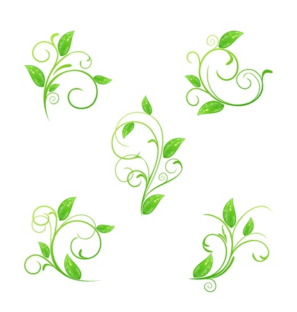 Illustration set green floral elements with eco leaves isolated Vector