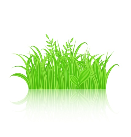 Illustration green grass with reflection Stock Illustration - 18434038