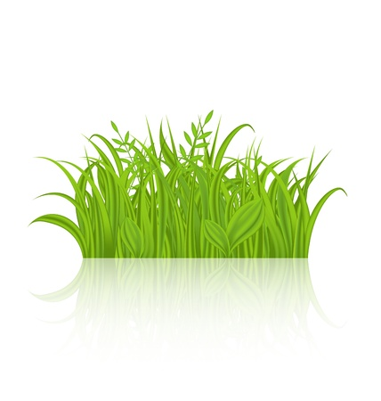 Illustration green grass with reflection  Stock Illustration - 18434036