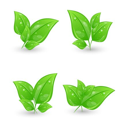 Illustration set of green eco leaves isolated on white background - vector illustration