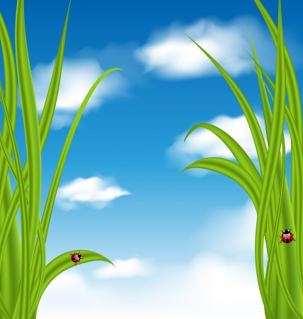 cloudiness: Illustration nature background with green grass and ladybug - vector Stock Photo