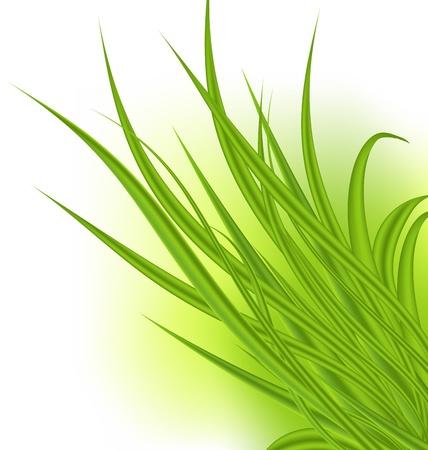 Illustration green grass isolated on white background - vector Stock Illustration - 20137653