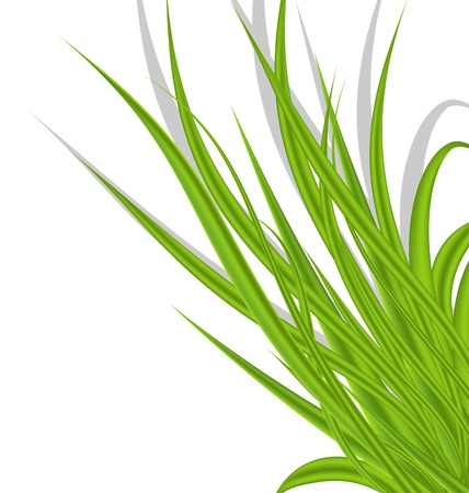 Illustration summer green grass isolated on white background - vector illustration