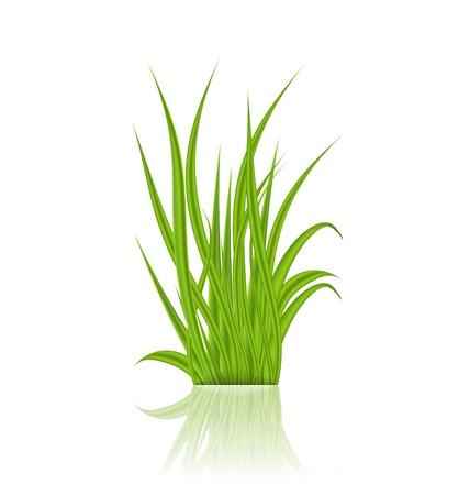 Illustration summer green grass with reflection - vector Stock Illustration - 20137626