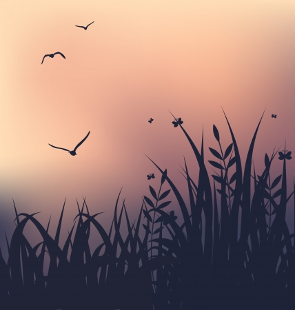 morning: Illustration sunset with grass and flying seagulls - vector