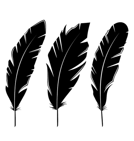 quill: Illustration set feathers isolated on white background - vector