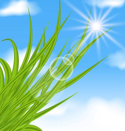 nebulosidade: Ilustração fundo natural iluminado com grama verde - vector