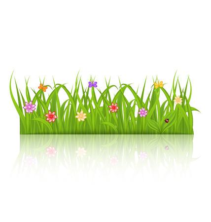 flor aislada: Hierba verde ilustraci�n con flores aisladas sobre fondo blanco - vector