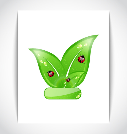 Illustration green eco leaves with ladybugs on the white paper - vector Vector
