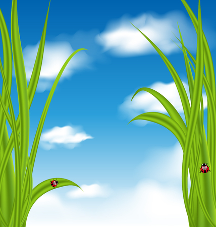 Illustration nature background with green grass and ladybug - vector Vector