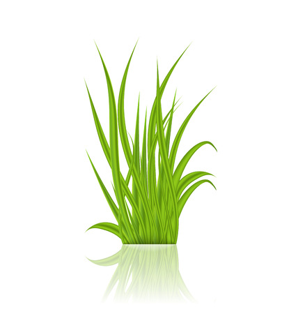 Illustration summer green grass with reflection - vector Vector