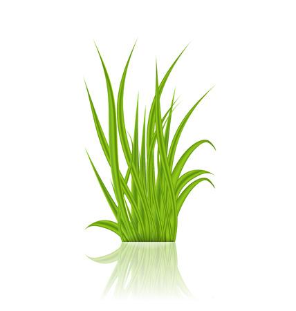 reflection of life: Illustration summer green grass with reflection - vector Illustration