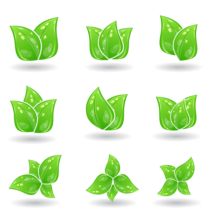 Illustration set of green eco leaves isolated on white background - vector Vector