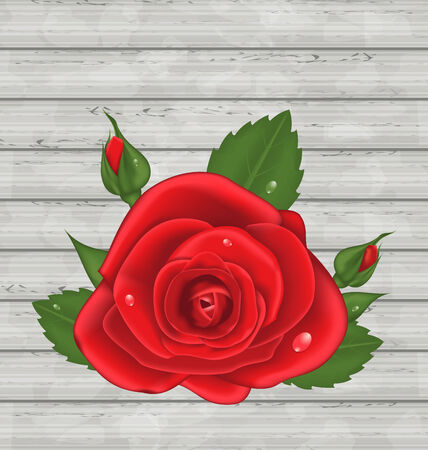 Illustration close-up red rose for Valentine Day on wooden background Vector