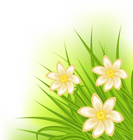 Illustration green grass with flowers, spring background - vector Vector