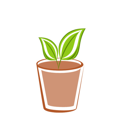 pedicle: Illustration flowerpot with green leafs plants isolated on white background - vector Illustration