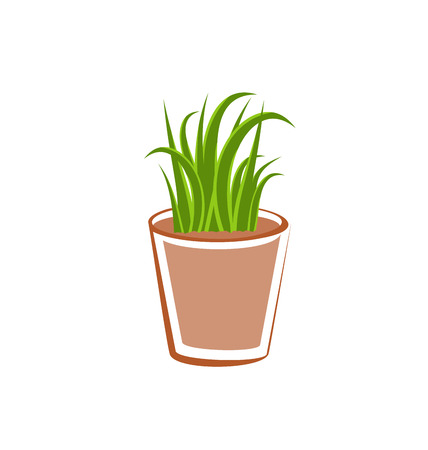 haulm: Illustration flowerpot with green grass plants isolated on white background - vector