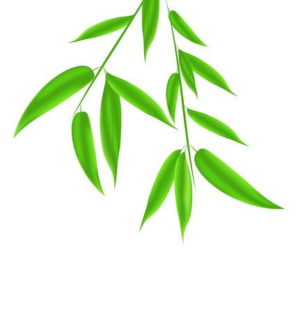 Hojas Ilustración de bambú