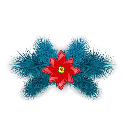 Illustration Christmas composition with blue fir twigs and flower poinsettia, isolated on white background - vector Vector