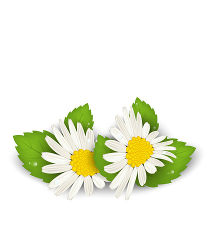 macro leaf: Illustration camomile flowers with shadows on white background - vector Illustration