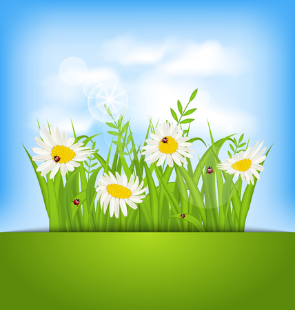 camomiles: Illustration spring nature background with camomiles, ladybugs, grass, blue sky, clouds - vector Illustration
