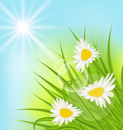 summer nature: Illustration summer nature background with daisy, grass, blue sky, sunny rays - vector