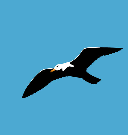 seabird: Illustration soaring seagull in blue sky, seabird isolated on blue background - vector