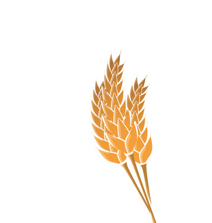 bran: Illustration ears of wheat isolated on white background - vector