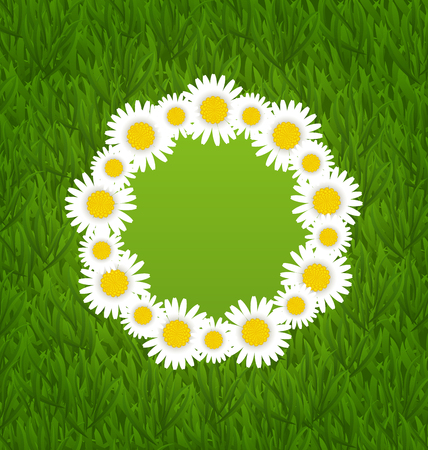 freshness: Illustration spring freshness card with grass and camomiles flowers - vector Illustration