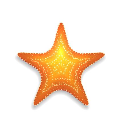 invertebrate: Illustration orange starfish with shadow isolated on white background - vector