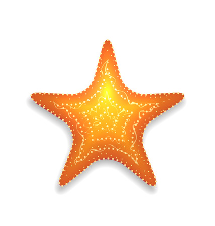 Illustration orange starfish with shadow isolated on white background - vector