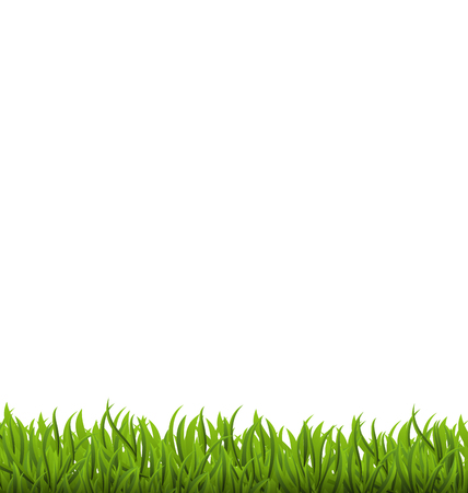 sedge: Illustration spring background with green grass, space for your text - vector Illustration
