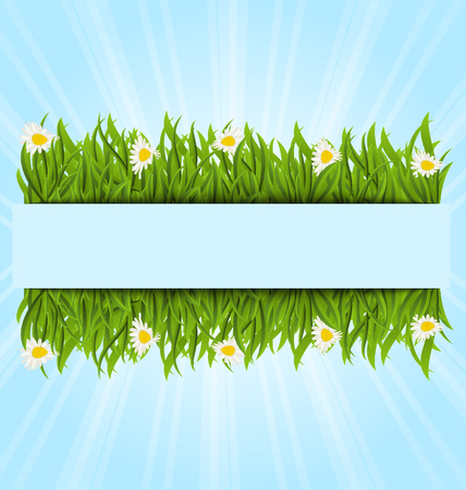 speelveld gras: Illustratie lente postkaart met grasveld en bloemen chamomiles, kopieer ruimte voor uw tekst - vector