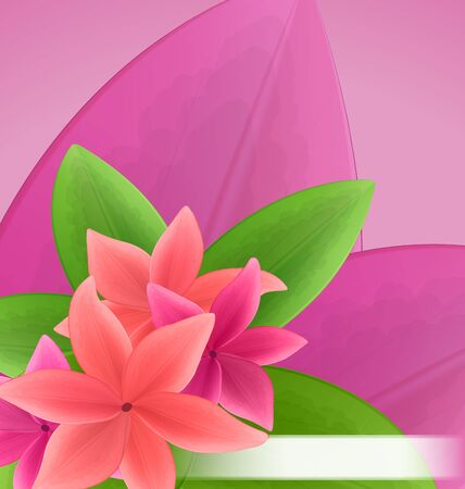 pink plumeria: Illustration pink and red frangipani (plumeria), exotic flowers green leaves plant - vector