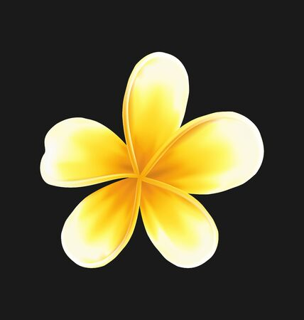 Illustration frangipani flower (plumeria) isolated on dark background - vector Illustration