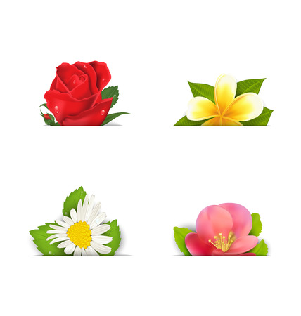 quince: Illustration beautiful flowers (rose, quince; frangipani), copy space for your text - vector