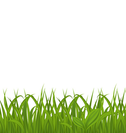 grass isolated: Illustration fresh green grass isolated on white background Stock Photo
