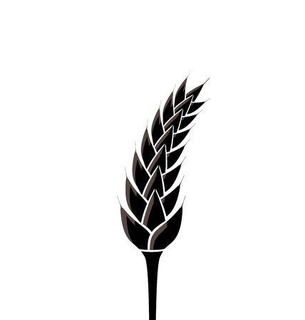 wheat isolated: Illustration black silhouette of spikelet of wheat isolated on white background