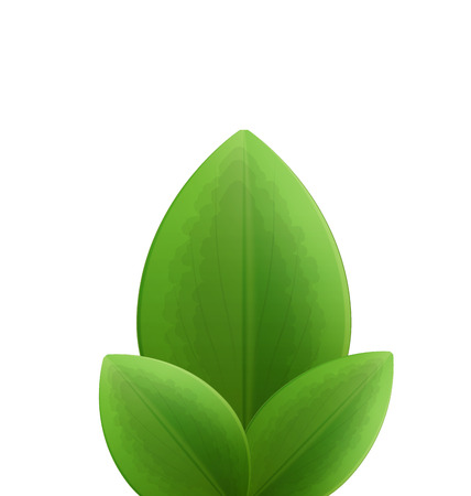 subtropical: Illustration of plant three realistic  green leaves isolated on white - raster