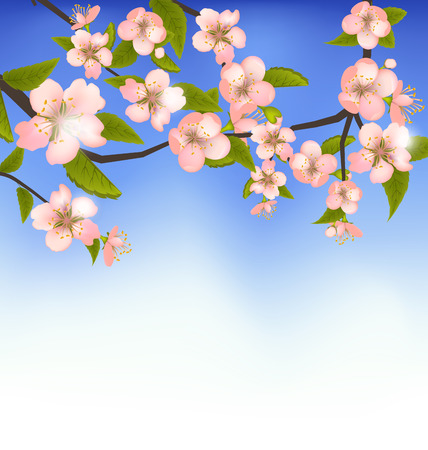 Illustration Spring Background of a Blossoming Tree Branch with Flowers - Vector illustration