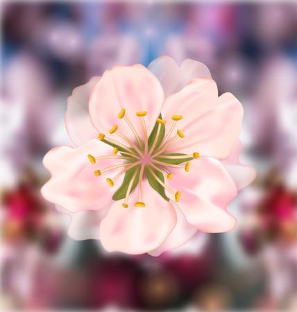 taffy: Illustration Cherry Blossom, Blurry Background - Vector