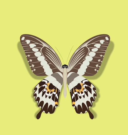 papilio: Illustration Papilio Gigon Butterfly Isolated on Yellow Background with Transparent Shadow - vector Illustration