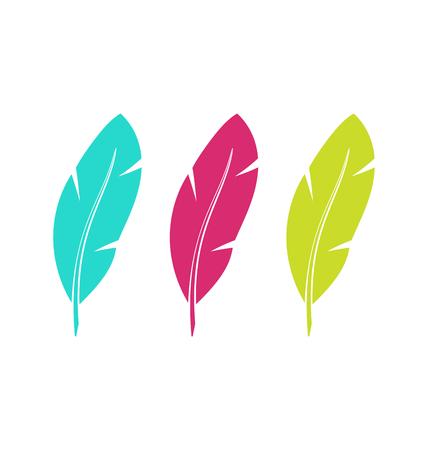 Illustration Set Colorful Feathers Isolated on White Background