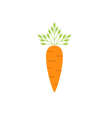 carrot isolated: Illustration Ripe Carrot Isolated on White Background, Vegetarian Food - raster Stock Photo