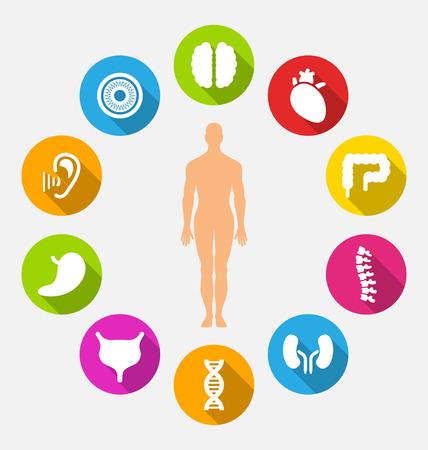 Silhouet van de mannelijke en interne menselijke organen Stock Illustratie